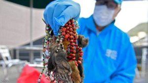 السلطات تكشف أجزاء الحيوانات والف ضحية الشعوذة للحيوان