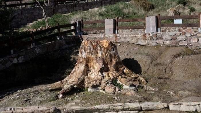 عثر العلماء على الشجرة أثناء أعمال طرق بالقرب من غابة عتيقة تحجرت قبل ملايين السنين