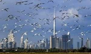 الإمارات تضيف 50 ألف مليونير جديد حتى عام 2025