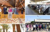محافظ قنا: دعم مشروعات الأمن الغذائى بـ ٤٧ ألف كتكوت وفرخه للتربية والتسمين