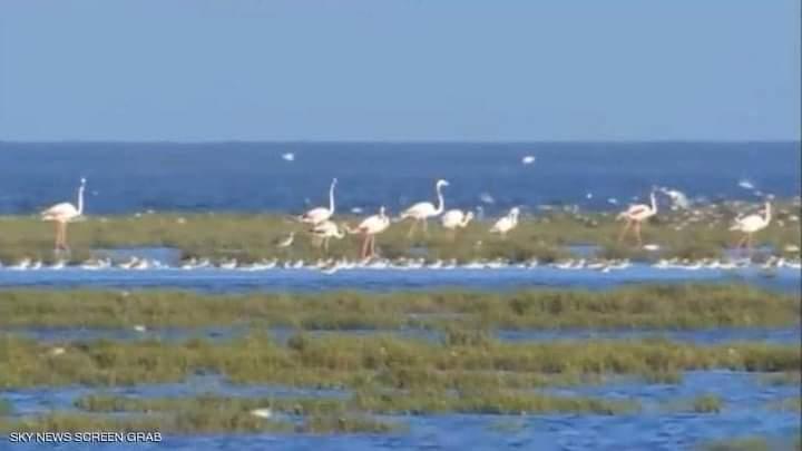 هناك أكثر من مئتي نوع من الطيور ومن الأسماك في المحمية