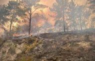 وزارة الخارجية المصرية تضامنها مع الشعب التركي في مواجهة تداعيات حرائق الغابات المندلعة